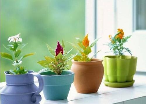 家居风水植物的摆放三大讲究